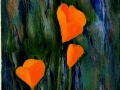 Scappoose (California) Poppies 16