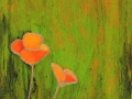 Scappoose (California) Poppies 4