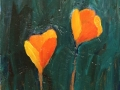 Scappoose (California) Poppies 12