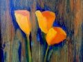 Scappoose (California) Poppies 10