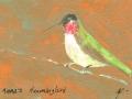 Anna 's Hummingbird