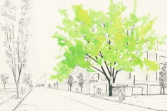 Maple-Tree-12th-and-Flanders