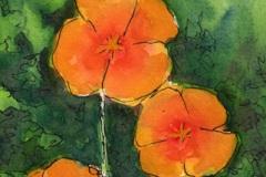 CA-Poppies1-copy