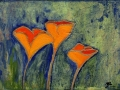 Scappoose (California) Poppies 3