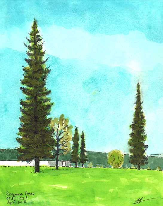 Watercolor painting of old fir trees in Scappoose, OR