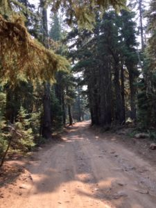 Dirt road through the forest