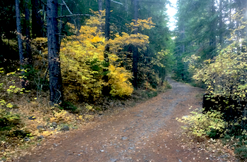 Road 2120 through the forest just off of Hwy 26