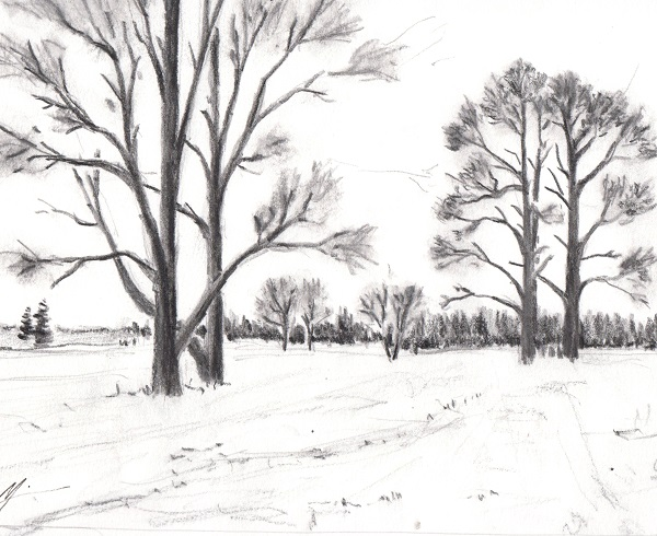 Black and white drawing of trees near Scappoose, OR