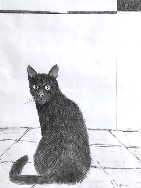 Pastel drawing of a black cat.